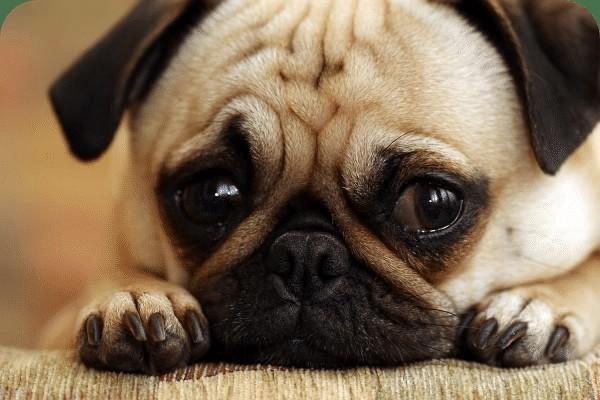 Sad dog (1)